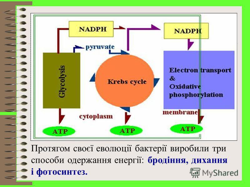 Енергетичний метаболізм прокаріотів - реакції, що забезпечують клітину внутрішньою енергією, значно перевищують біосинтетичні процеси. Мікроорганізми можуть використовувати не всі форми енергії, що існують у природі. Вони здатні користуватись тільки