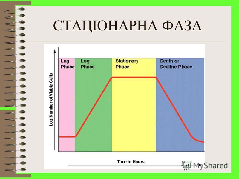 СТАЦІОНАРНА ФАЗА Відмирання та поділ клітин на постійному рівні (рівновага) Смерть повязана із зменшенням кількості живильних речовин, змінами рН, токсичною дією речовин, зменшенням кисню Клітини менші і мають небагато рибосом Деколи клітини не гинут