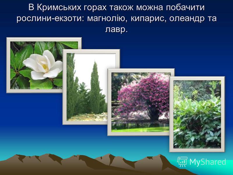 В Кримських горах також можна побачити рослини-екзоти: магнолію, кипарис, олеандр та лавр.