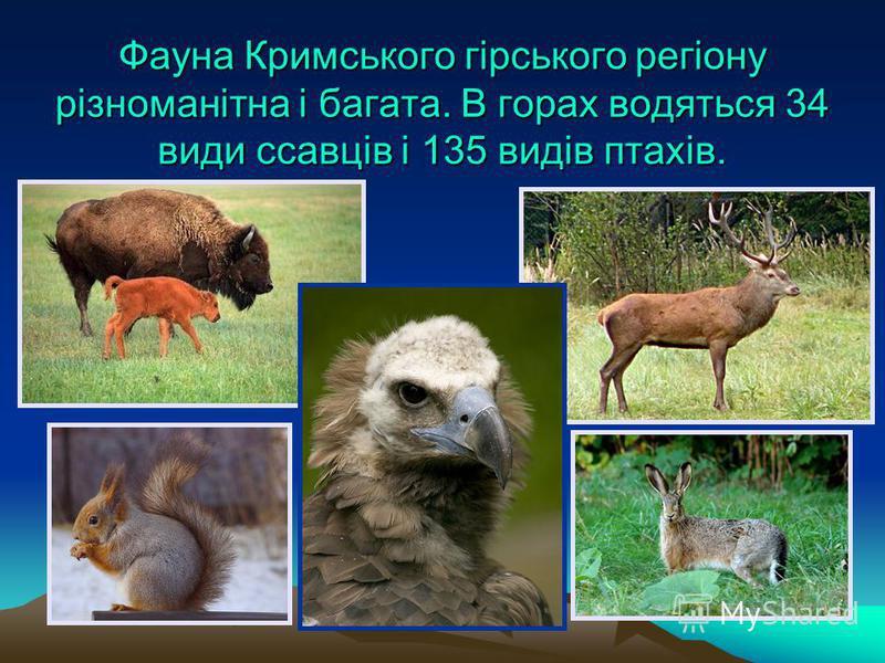 Фауна Кримського гірського регіону різноманітна і багата. В горах водяться 34 види ссавців і 135 видів птахів.