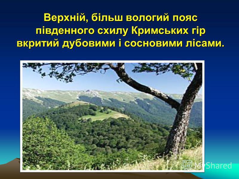 Верхній, більш вологий пояс південного схилу Кримських гір вкритий дубовими і сосновими лісами.