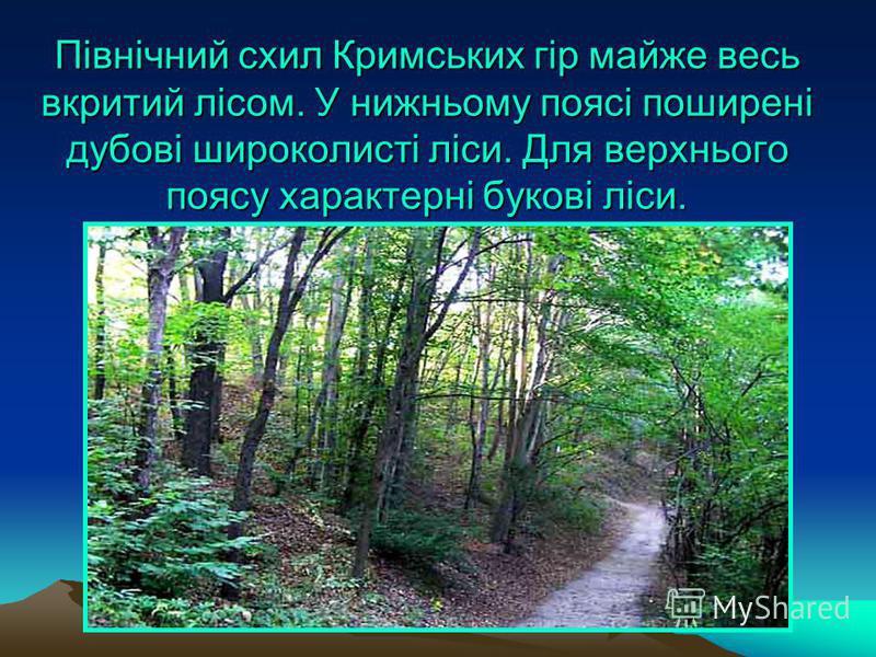 Північний схил Кримських гір майже весь вкритий лісом. У нижньому поясі поширені дубові широколисті ліси. Для верхнього поясу характерні букові ліси.