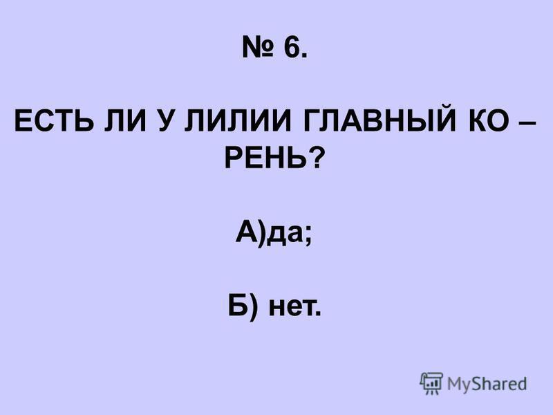 6. ЕСТЬ ЛИ У ЛИЛИИ ГЛАВНЫЙ КО – РЕНЬ? А)да; Б) нет.