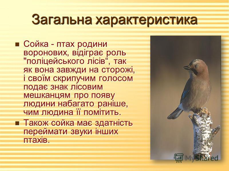 Загальна характеристика n Сойка - птах родини воронових, відіграє роль