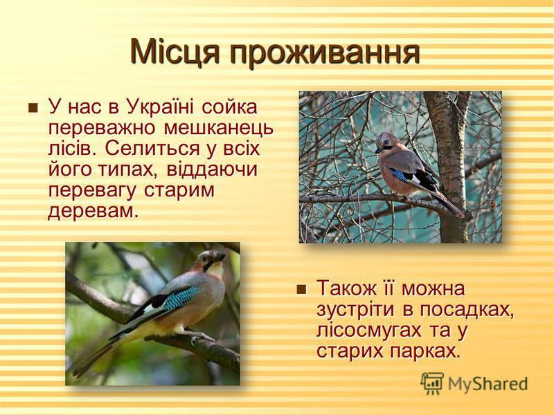 Місця проживання n У нас в Україні сойка переважно мешканець лісів. Селиться у всіх його типах, віддаючи перевагу старим деревам. n Також її можна зустріти в посадках, лісосмугах та у старих парках.
