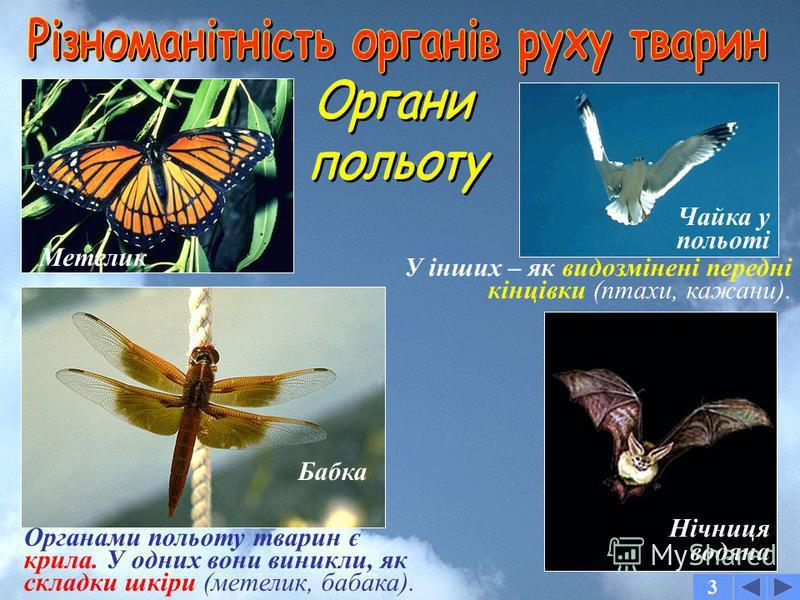 3 Зебра Лобстер рожевий Дощовий черв'як Черви не мають спеціальних органів руху. Вони звиваються усім тілом. Раки мають 5 пар ходильних ніг. У ссавців – лише 2 пари ніг Жук-вузькокрилка Павук-птахоїд У павуків – 4 пари ходильних ніг. У комах – 3 пари