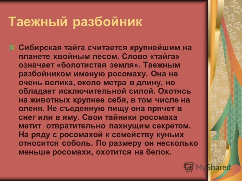 Таежный разбойник Сибирская тайга считается крупнейшим на планете хвойным лесом. Слово «тайга» означает «болотистая земля». Таежным разбойником именую росомаху. Она не очень велика, около метра в длину, но обладает исключительной силой. Охотясь на жи
