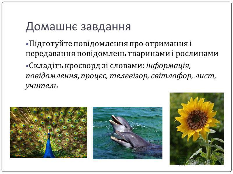 Домашнє завдання Підготуйте повідомлення про отримання і передавання повідомлень тваринами і рослинами Складіть кросворд зі словами: інформація, повідомлення, процес, телевізор, світлофор, лист, учитель