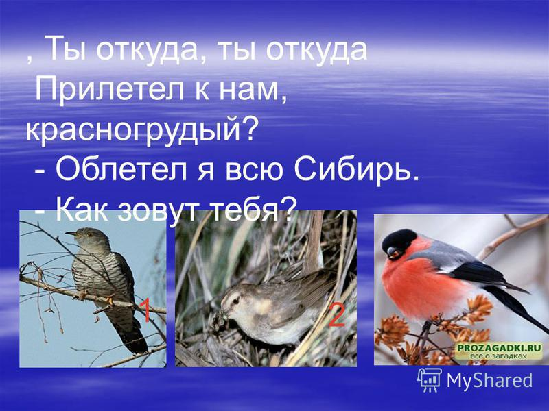 , Ты откуда, ты откуда Прилетел к нам, красногрудый? - Облетел я всю Сибирь. - Как зовут тебя? 1 23
