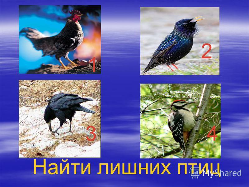 1 2 34 Найти лишних птиц 2