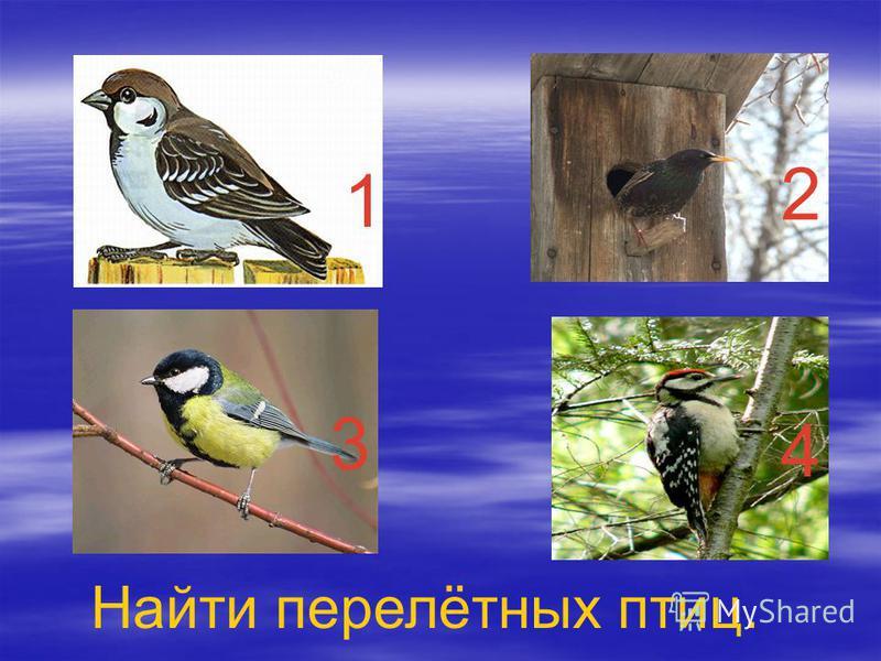 1 2 3 4 Найти перелётных птиц.