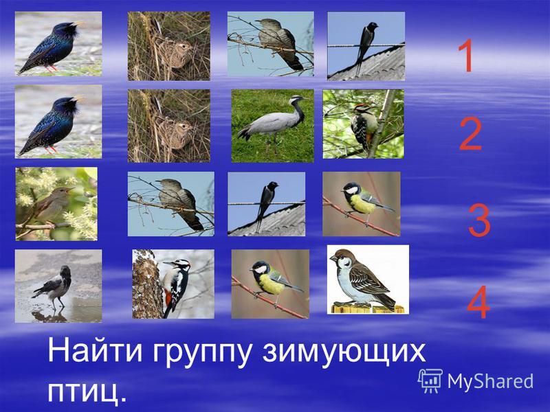 1 2 3 4 Найти группу зимующих птиц.