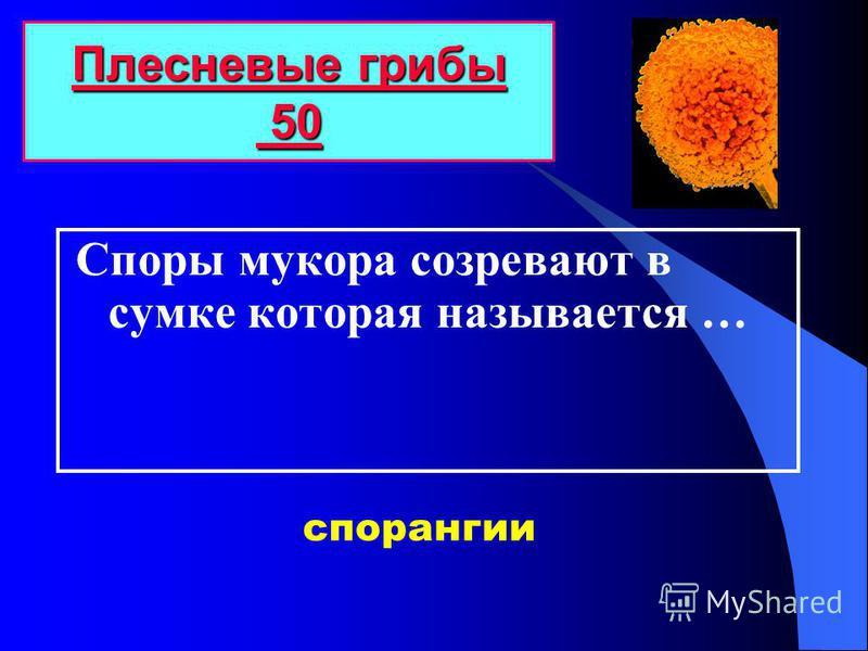 Споры мукора созревают в сумке которая называется … Плесневые грибы 50 Плесневые грибы 50 спорангии