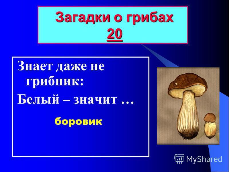 Знает даже не грибник: Белый – значит … Загадки о грибах 20 Загадки о грибах 2020 боровик