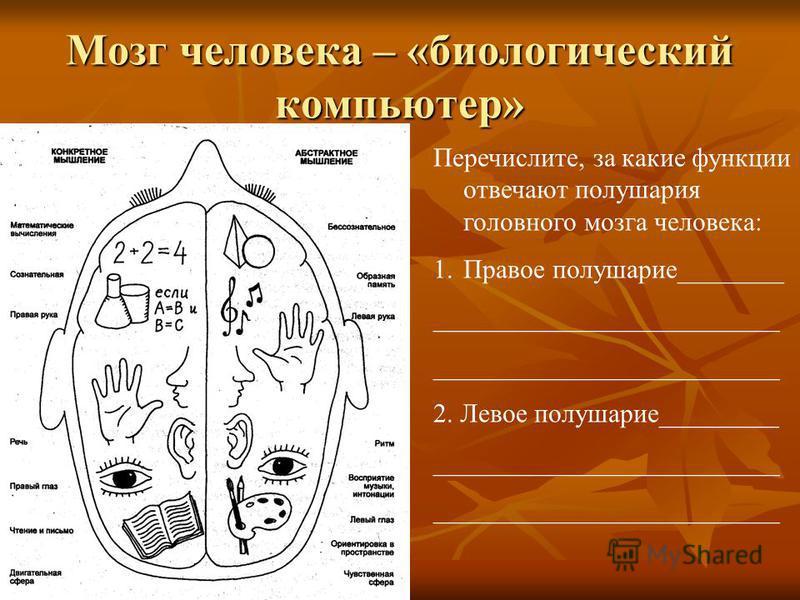 Мозг человека – «биологический компьютер» Перечислите, за какие функции отвечают полушария головного мозга человека: 1. Правое полушарие________ __________________________ 2. Левое полушарие_________ __________________________