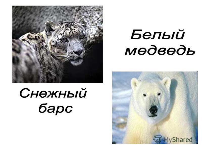На белых страницах записаны животные, численность которых всегда была невелика.