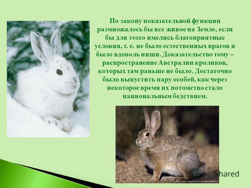 По закону показательной функции размножалось бы все живое на Земле, если бы для этого имелись благоприятные условия, т. е. не было естественных врагов и было вдоволь пищи. Доказательство тому – распространение Австралии кроликов, которых там раньше н
