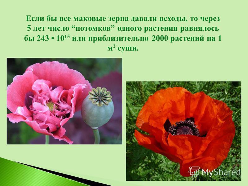 Если бы все маковые зерна давали всходы, то через 5 лет число потомков одного растения равнялось бы 243 10 15 или приблизительно 2000 растений на 1 м 2 суши.