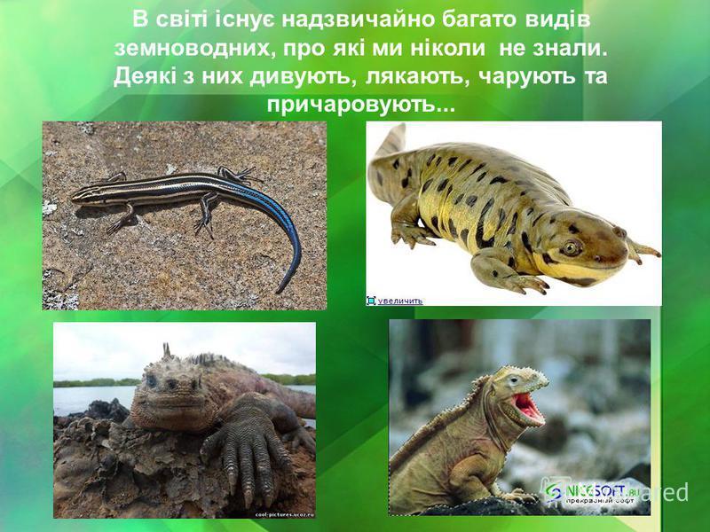 В світі існує надзвичайно багато видів земноводних, про які ми ніколи не знали. Деякі з них дивують, лякають, чарують та причаровують...