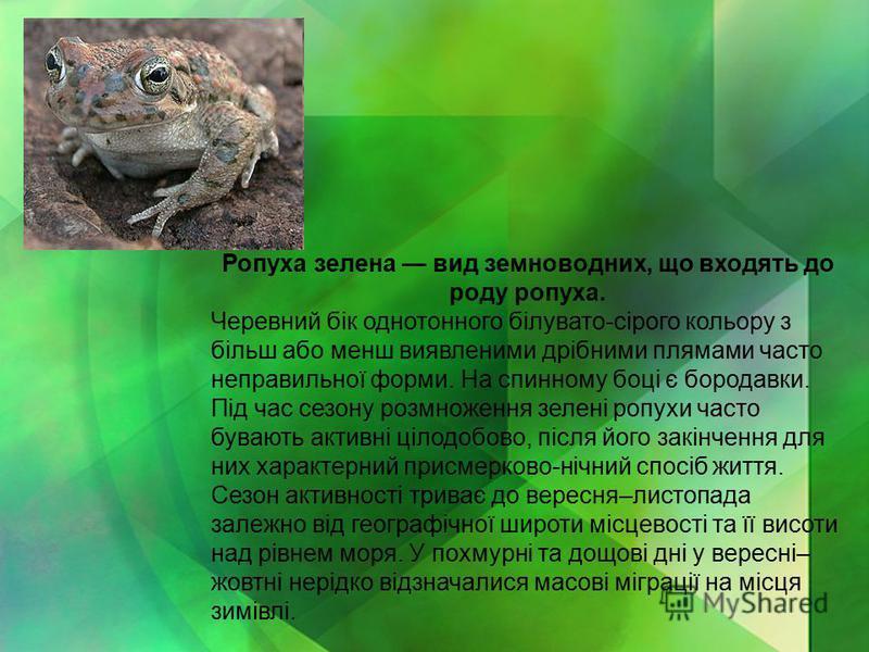Ропуха зелена вид земноводних, що входять до роду ропуха. Черевний бік однотонного білувато-сірого кольору з більш або менш виявленими дрібними плямами часто неправильної форми. На спинному боці є бородавки. Під час сезону розмноження зелені ропухи ч