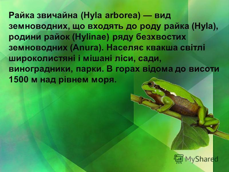 Райка звичайна (Hyla arborea) вид земноводних, що входять до роду райка (Hyla), родини райок (Hylinae) ряду безхвостих земноводних (Anura). Населяє квакша світлі широколистяні і мішані ліси, сади, виноградники, парки. В горах відома до висоти 1500 м