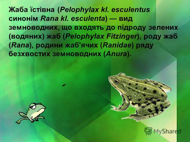 Жаба їстівна (Pelophylax kl. esculentus синонім Rana kl. esculenta) вид земноводних, що входять до підроду зелених (водяних) жаб (Pelophylax Fitzinger), роду жаб (Rana), родини жаб'ячих (Ranidae) ряду безхвостих земноводних (Anura).