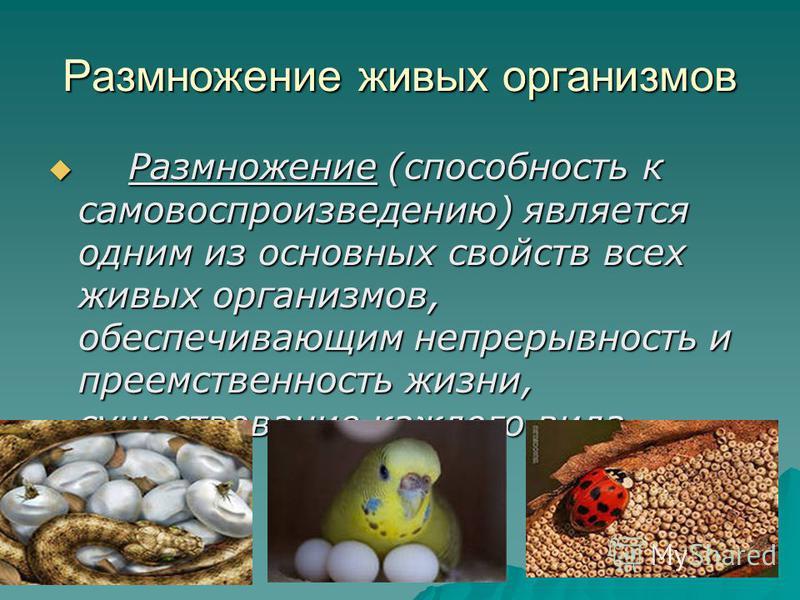 Размножение живых организмов Размножение (способность к самовоспроизведению) является одним из основных свойств всех живых организмов, обеспечивающим непрерывность и преемственность жизни, существование каждого вида. Размножение (способность к самово