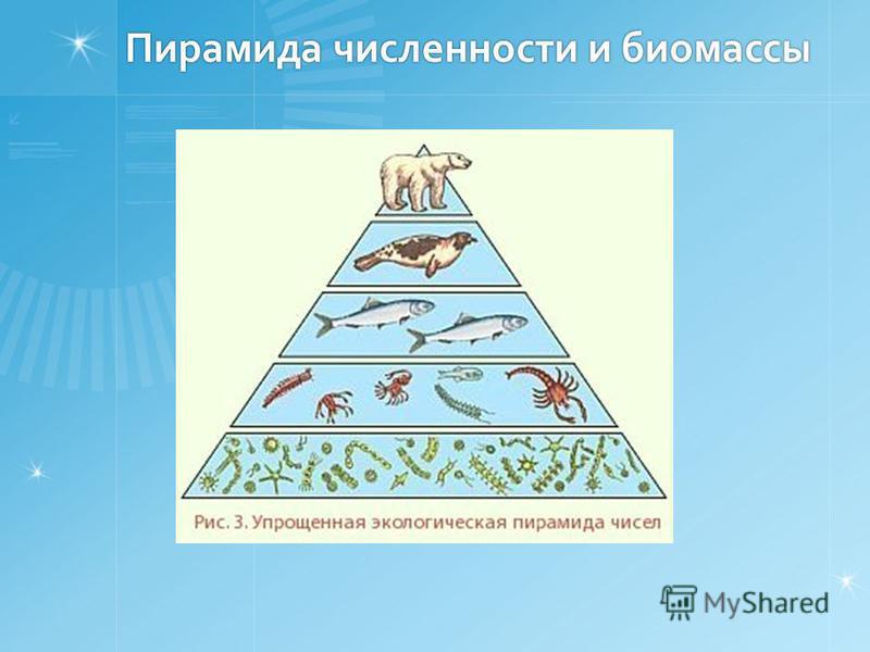 Пирамида численности и биомассы