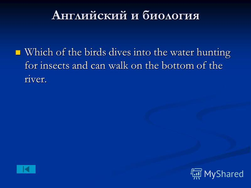Английский и биология Which of the birds dives into the water hunting for insects and can walk on the bottom of the river. Which of the birds dives into the water hunting for insects and can walk on the bottom of the river.