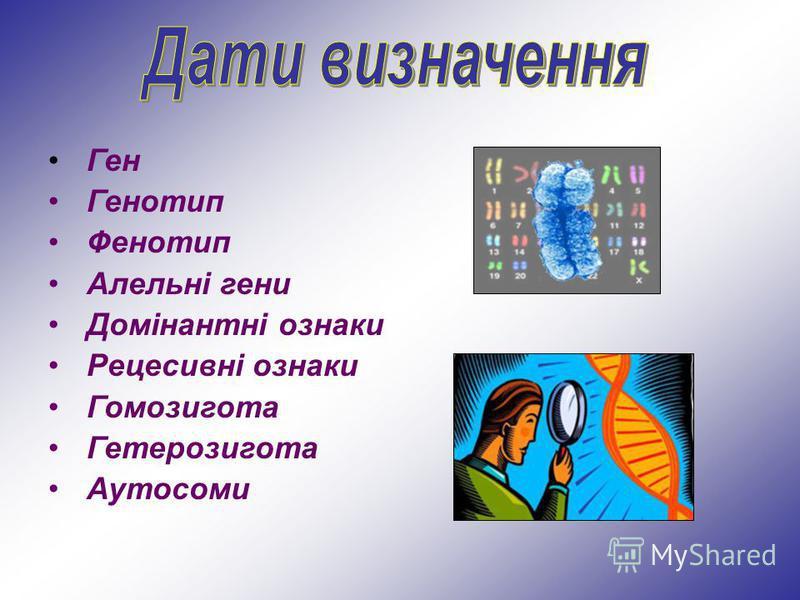 Ген Генотип Фенотип Алельні гени Домінантні ознаки Рецесивні ознаки Гомозигота Гетерозигота Аутосоми