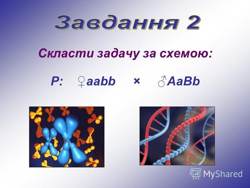 Скласти задачу за схемою: Р: ааbb × АaBb