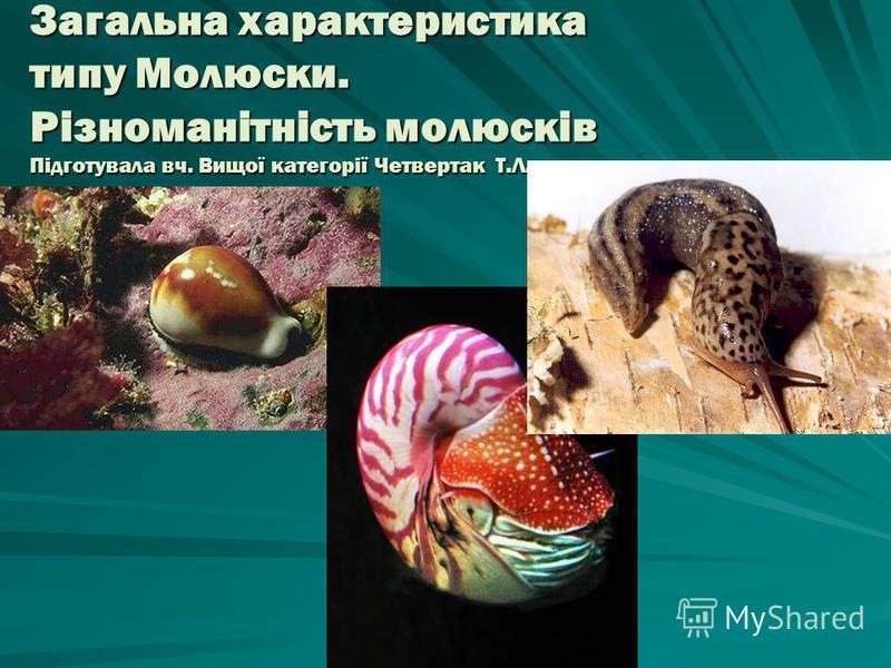 Загальна характеристика типу Молюски. Різноманітність молюсків Підготувала вч. Вищої категорії Четвертак Т.Л.
