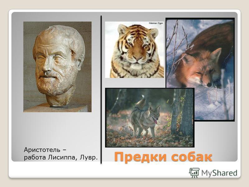 Предки собак Предки собак Аристотель – работа Лисиппа, Лувр.