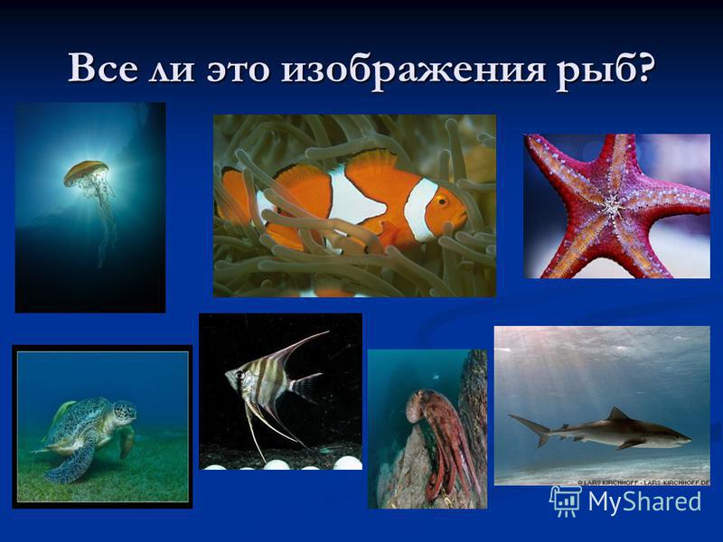 Все ли это изображения рыб?