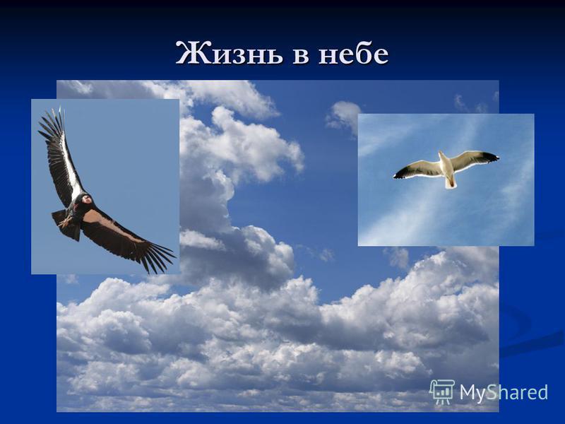 Жизнь в небе