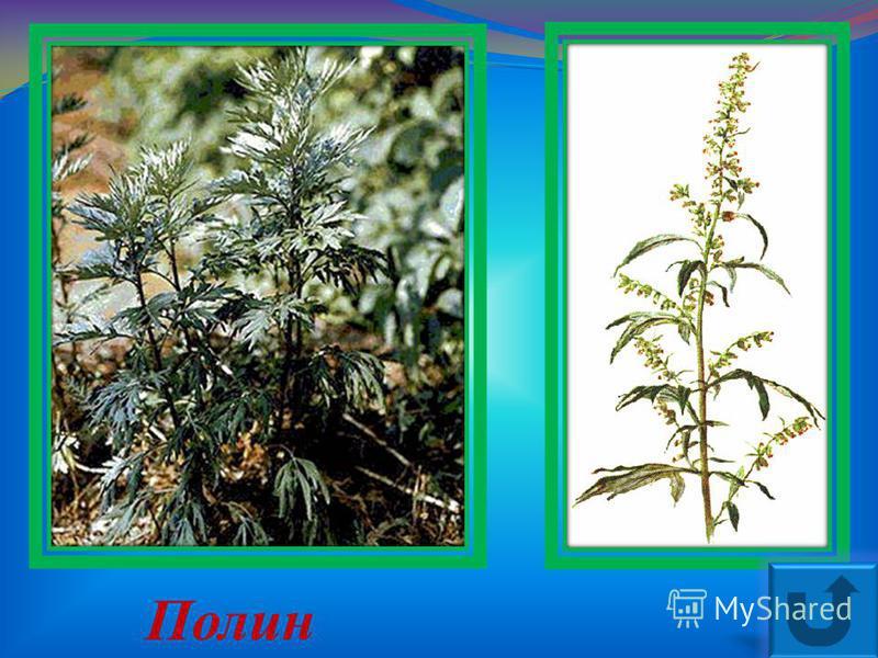Яка це рослина ?