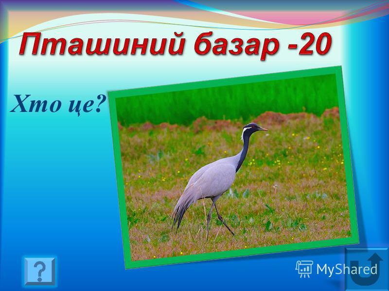 Підрахунок цієї продукції пташиних господарств рекомендується здійснювати саме восени … (Курчата)