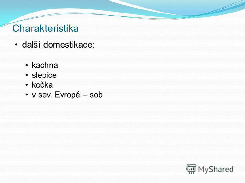 Charakteristika další domestikace: kachna slepice kočka v sev. Evropě – sob