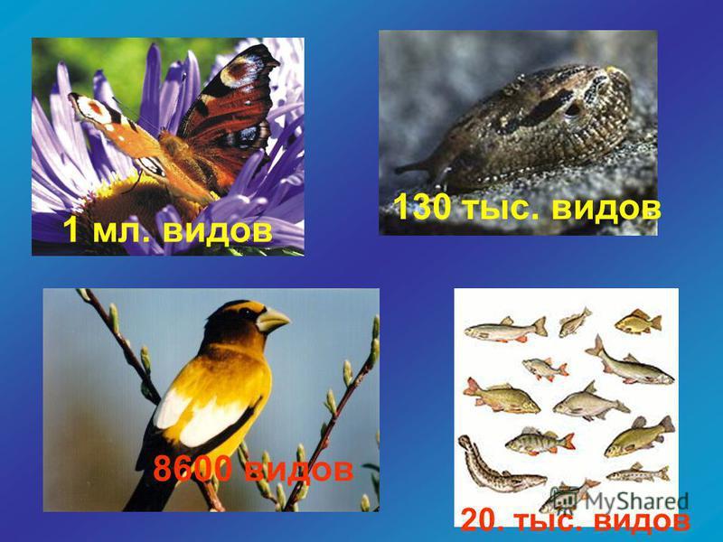 1 мл. видов 130 тыс. видов 20. тыс. видов 8600 видов