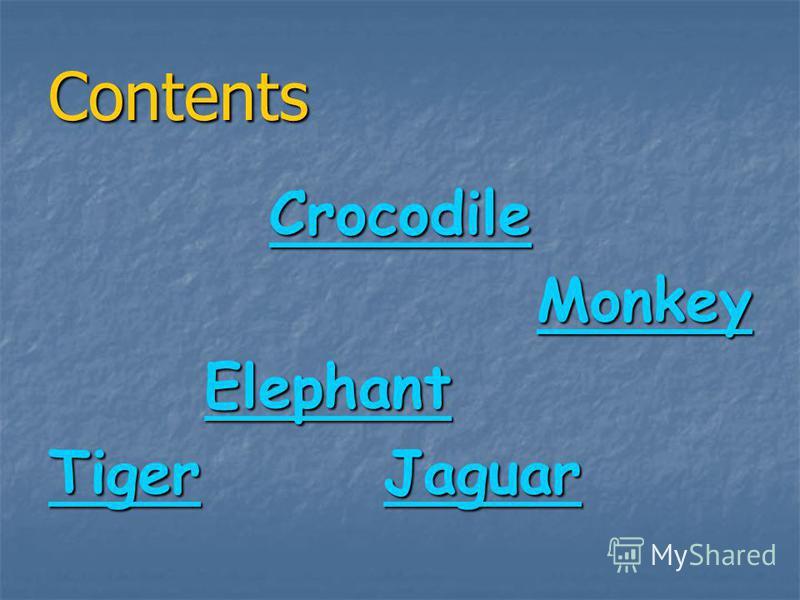 Wild Animals Thesaurus