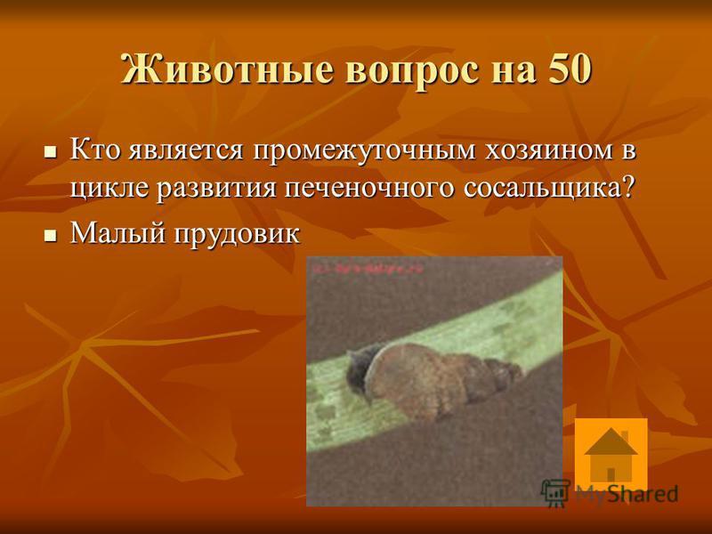 Животные вопрос на 40 Что такое цевка у птиц? Что такое цевка у птиц? Несколько сросшихся мелких костей стопы Несколько сросшихся мелких костей стопы