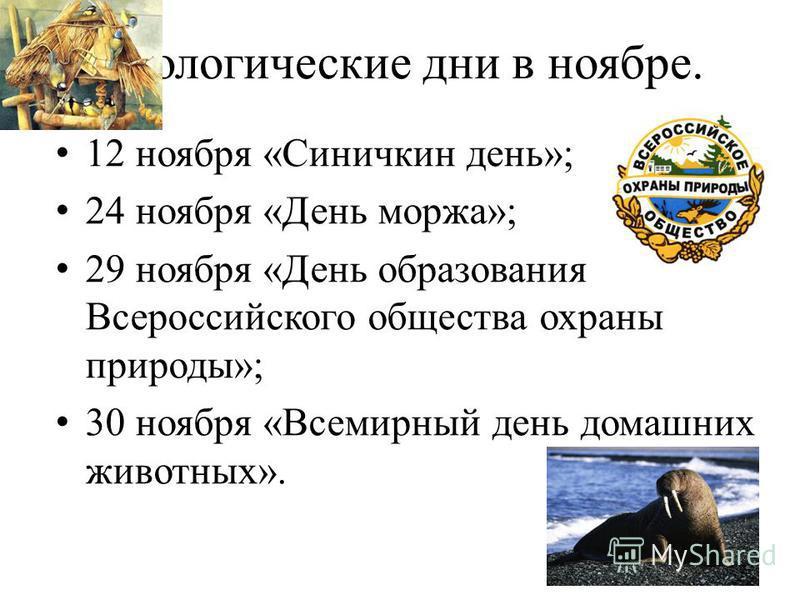 Экологические дни в ноябре. 12 ноября «Синичкин день»; 24 ноября «День моржа»; 29 ноября «День образования Всероссийского общества охраны природы»; 30 ноября «Всемирный день домашних животных».