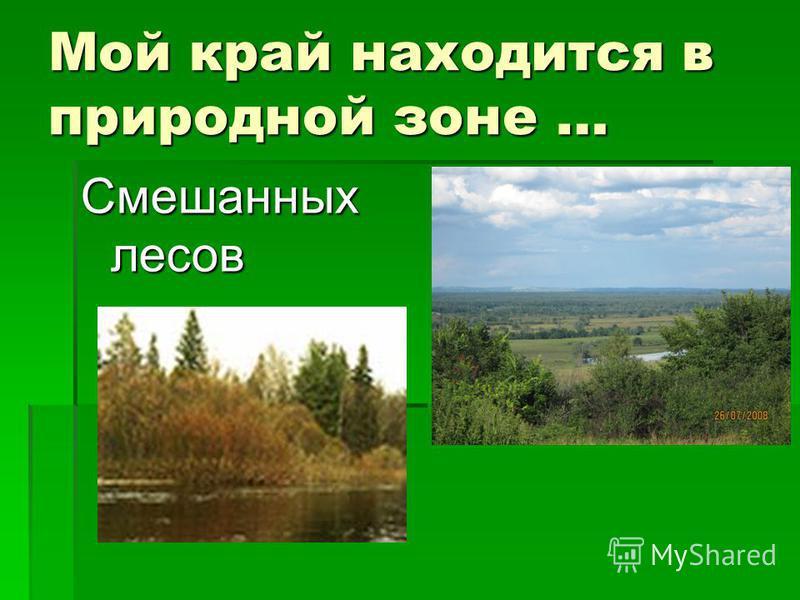 Мой край находится в природной зоне … Смешанных лесов