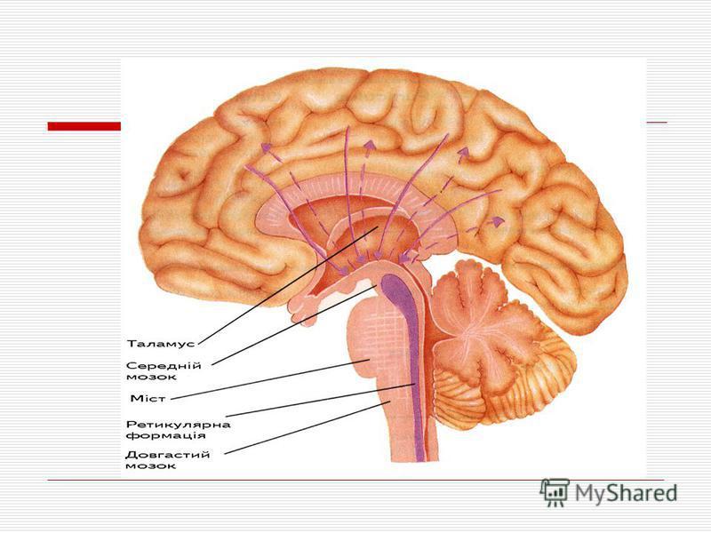 Головна функція мозочка полягає в уточненні роботи інших рухових центрів, узгодженні цілеспрямованих рухів і регуляції тонусу м'язів. Для цього мозочок взаємодіє зі всіма рівнями регуляції рухових функцій.