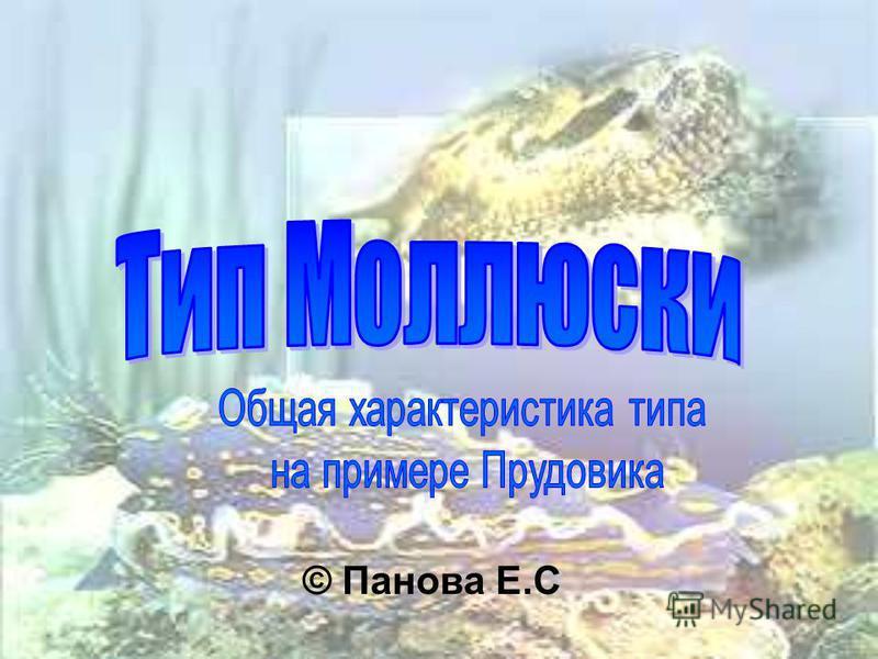 © Панова Е.С