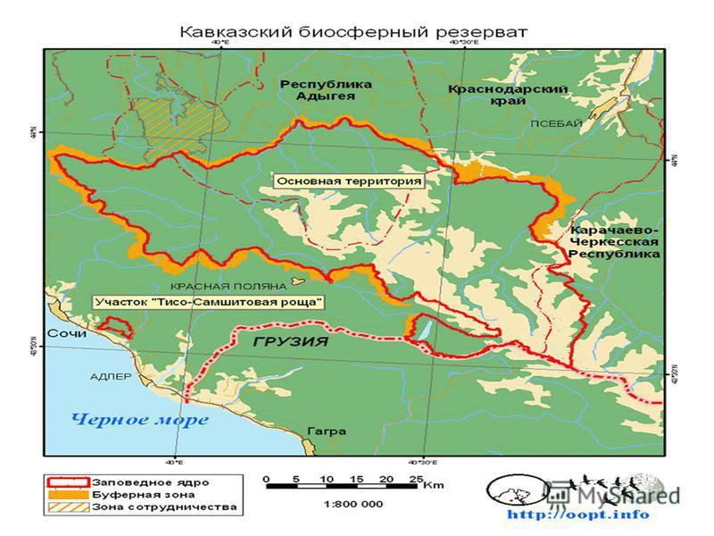 Площадь 280335 га. Площадь Кавказского государственного биосферного заповедника составляет 280335 га. Расположен в юго-восточной части Краснодарского края. Здесь представлены низкогорный, среднегорный и высокогорный типы рельефа. Климаторазделом служ