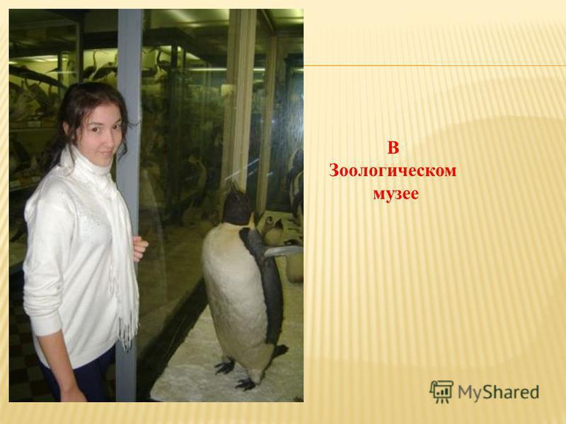 В Зоологическом музее