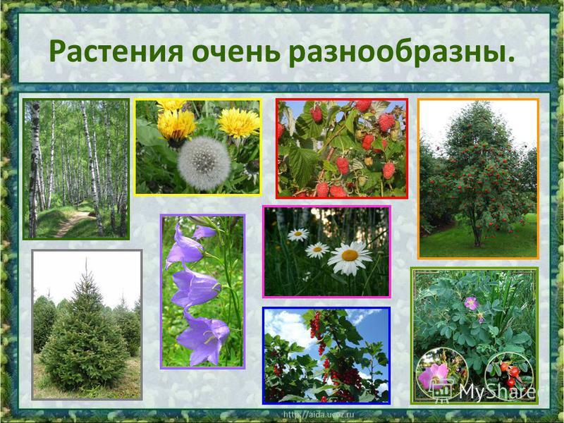 Растения очень разнообразны.