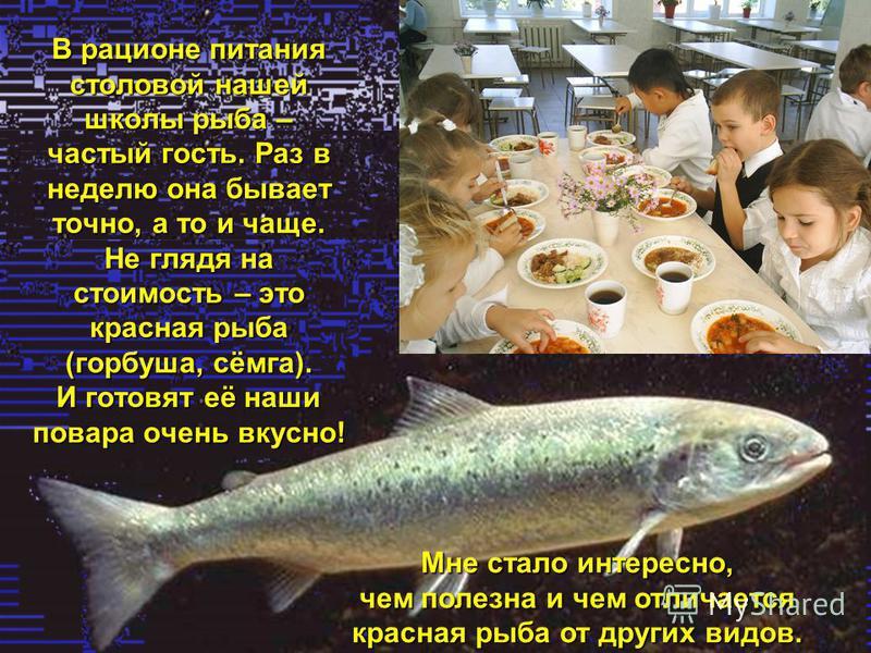 В рационе питания столовой нашей школы рыба – частый гость. Раз в неделю она бывает точно, а то и чаще. Не глядя на стоимость – это красная рыба (горбуша, сёмга). И готовят её наши повара очень вкусно! Мне стало интересно, чем полезна и чем отличаетс