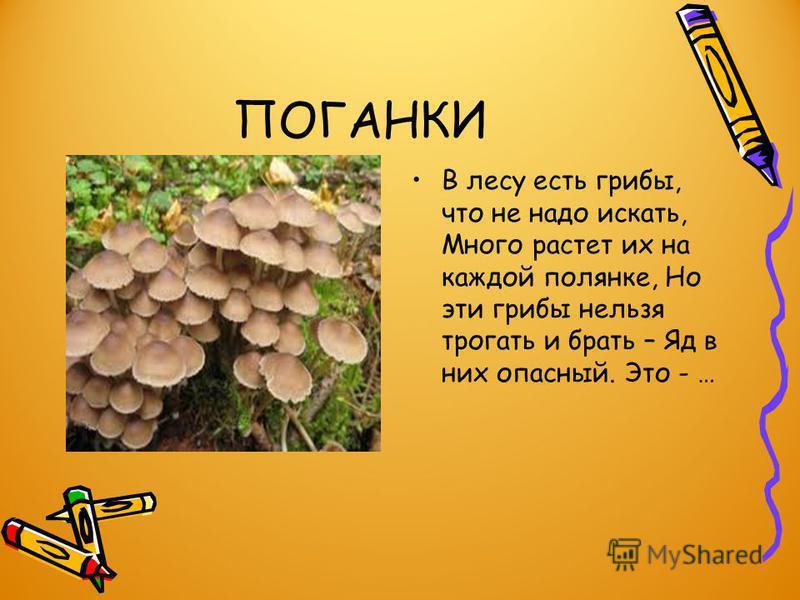 Ядовитые грибы Возле леса на опушке, Украшая темный бор, Вырос пестрый, как Петрушка, Ядовитый... (мухомор).